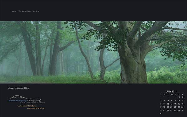 July 2011 Free Desktop Wallpaper – Forest Fog, Hudson Valley
