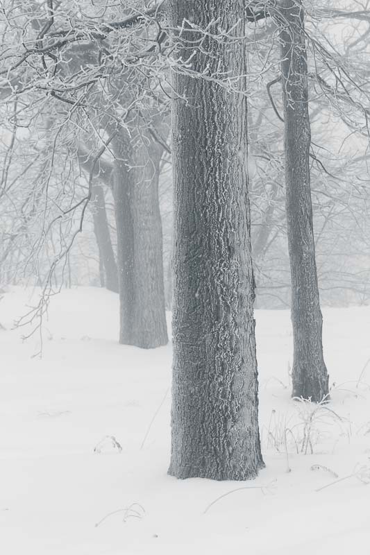 Cold Trees, Mt Beacon, NY
