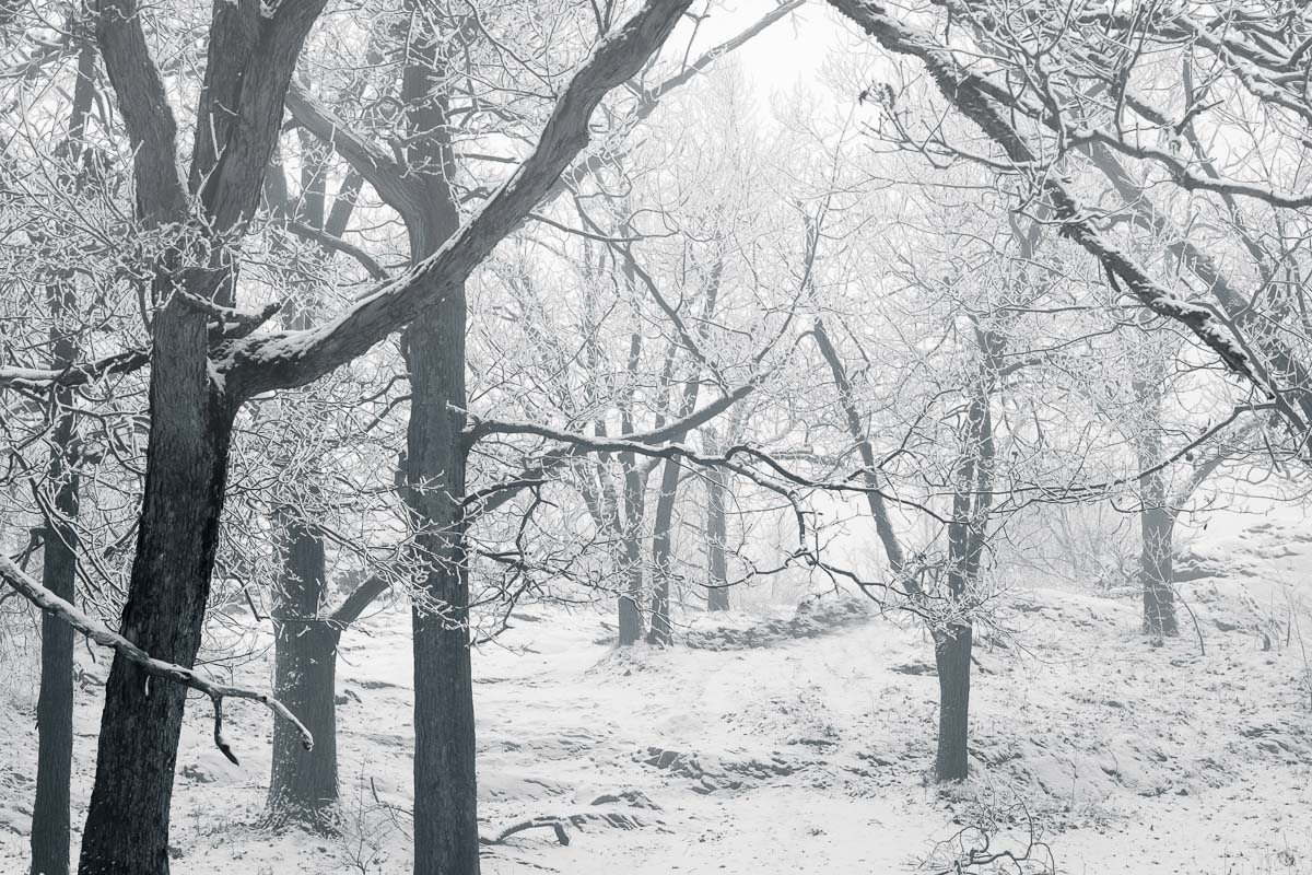 Snow, Fog, and Trees, NY