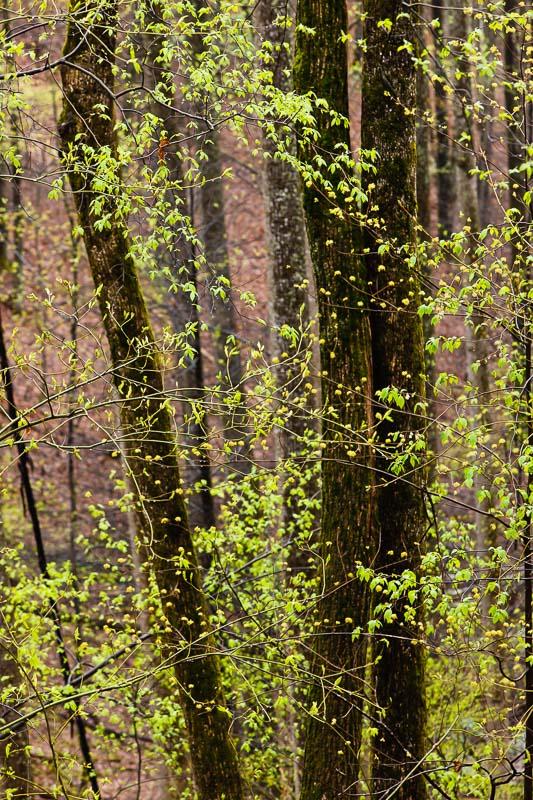 Spring Blossom I, TN