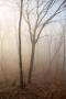 Fog Trees, Hudson Valley