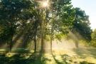 Morning Trees, NY