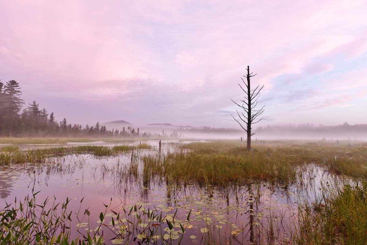 Heron Marsh, Adirondacks