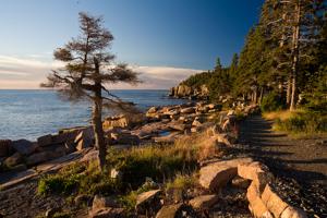 Shore Path, Acadia National Park