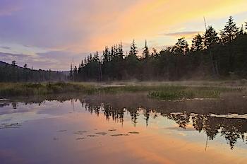 Forked Lake Dawn