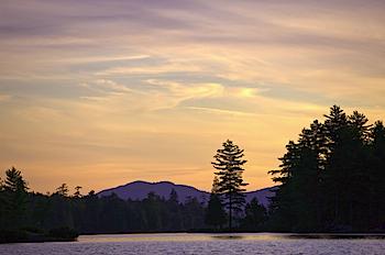 Pine Tree, Forked Lake