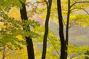 Autumns_Play.jpg