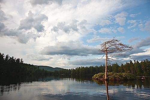 Wind Tree, Adirondack Park