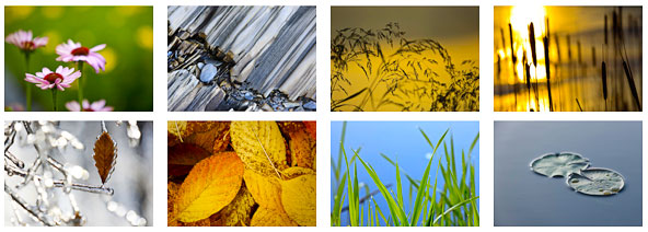 naturescapes_notecards_grid