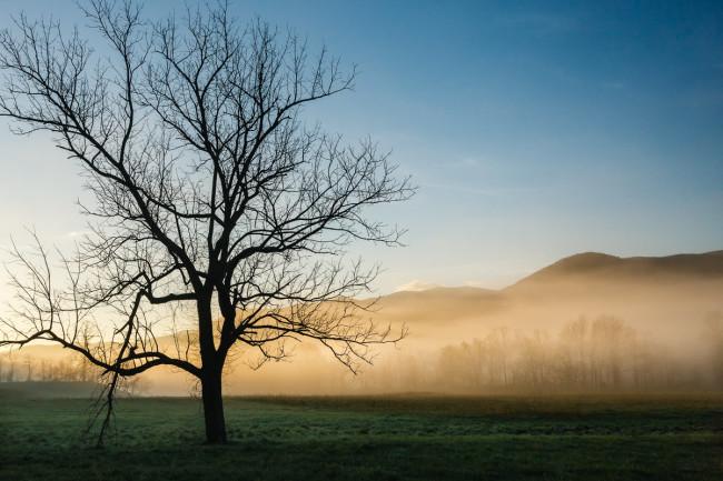 Lone Tree at Cades