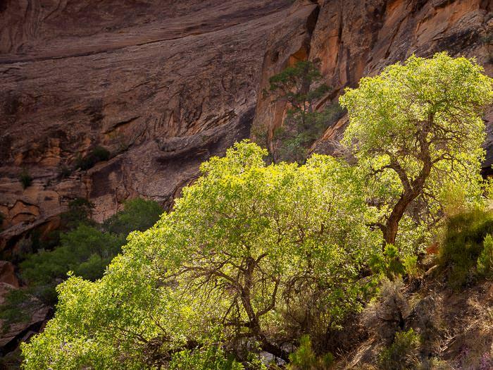 Canyon Green
