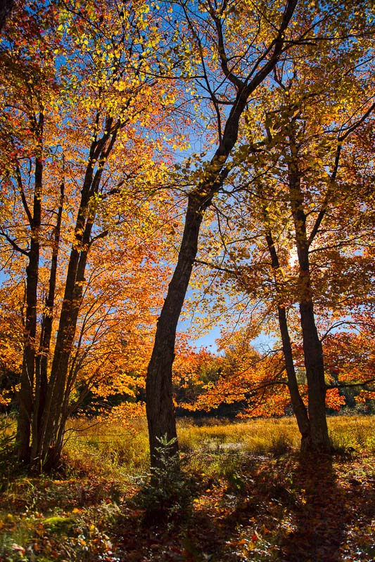 Color and Shadow, Maine