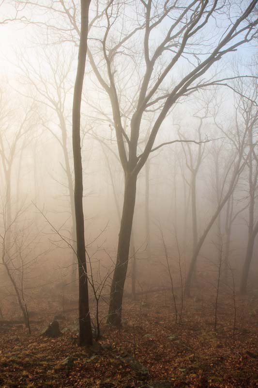 Fog Trees, Hudson Valley
