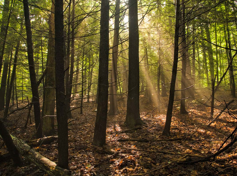 Forest Light, Mohonk Preserve