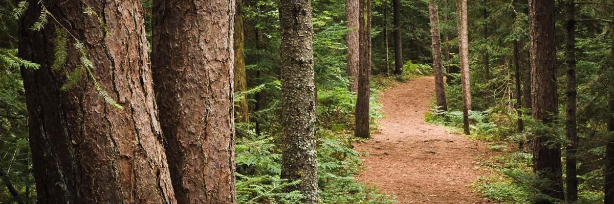 Forest View, Adirondacks