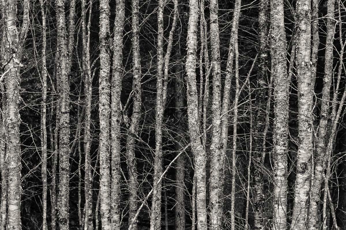 Gap Trees, TN