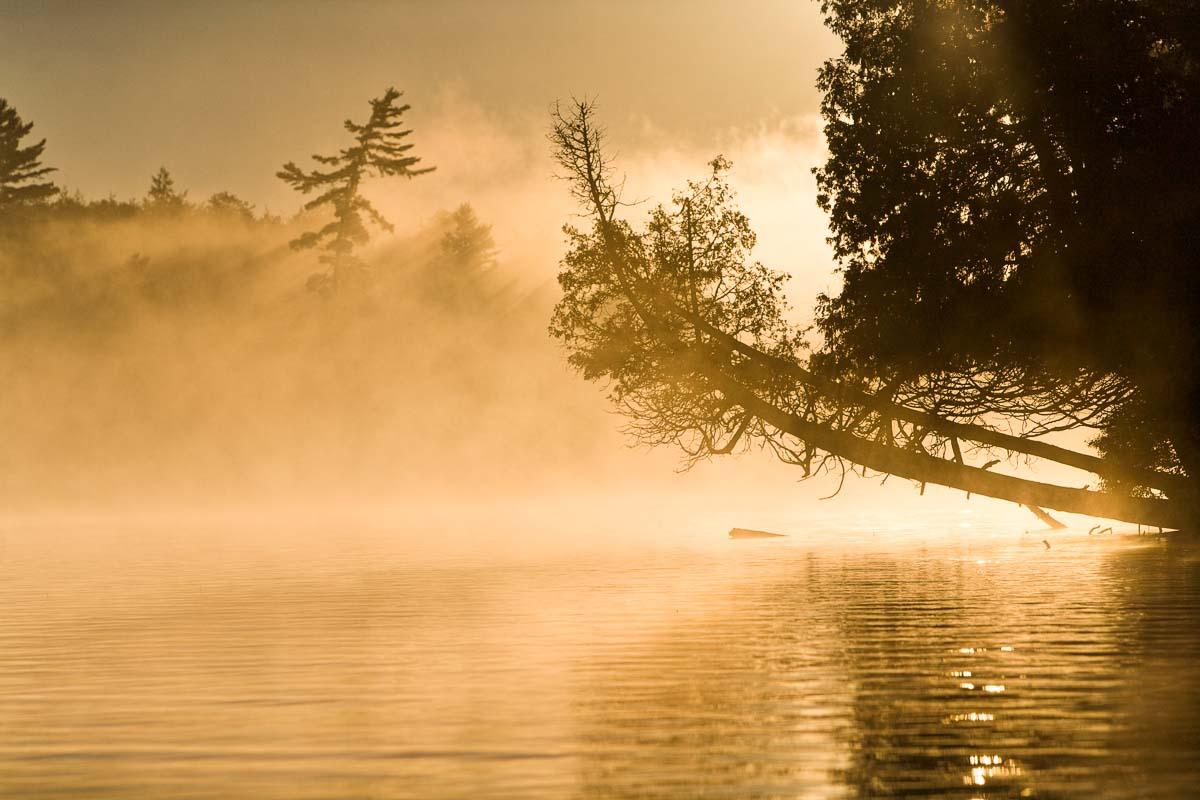 Golden Light, Adirondacks