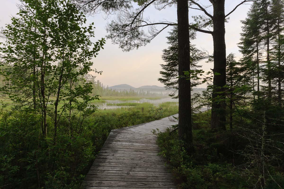 Heron Marsh Trail, Adirondacks