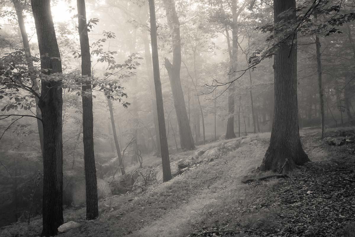 Hidden Path, Hudson Valley, NY