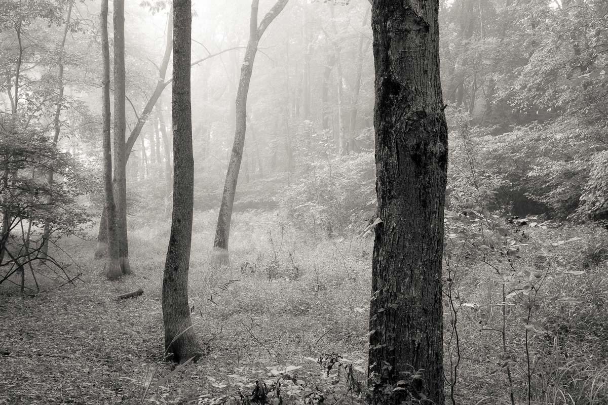 Hidden Trees, Hudson Valley