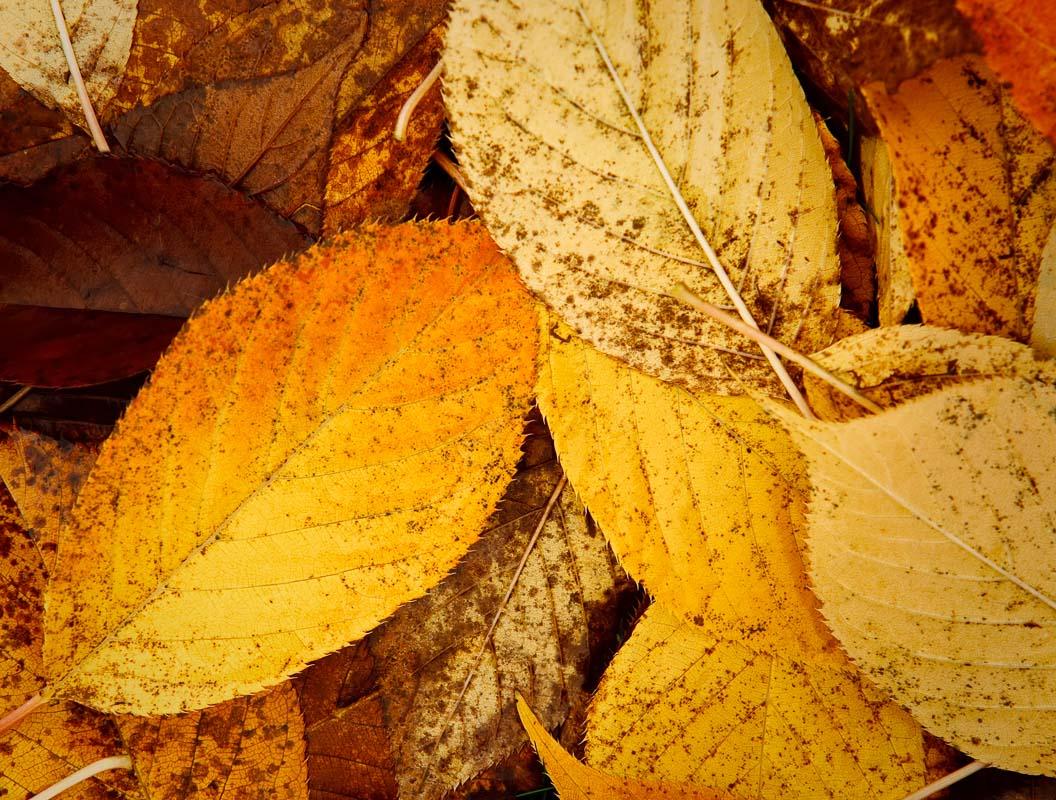 Quiet Leaves