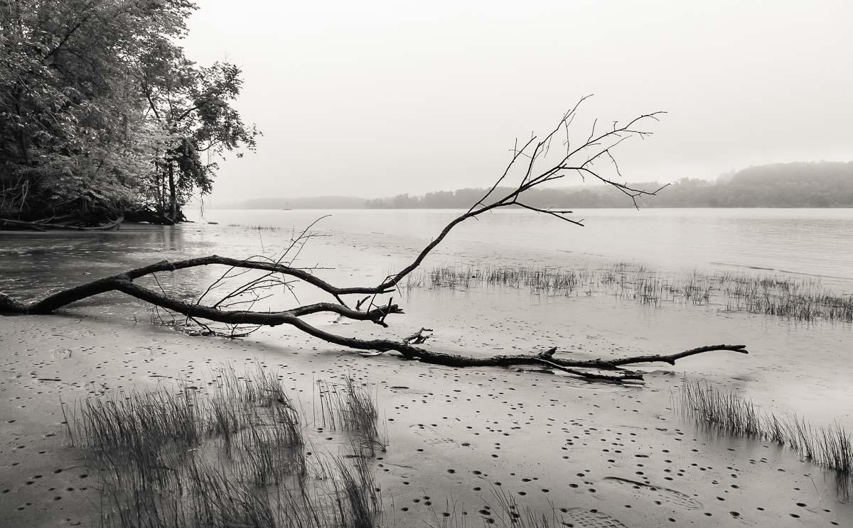 River and Downed Tree, NY