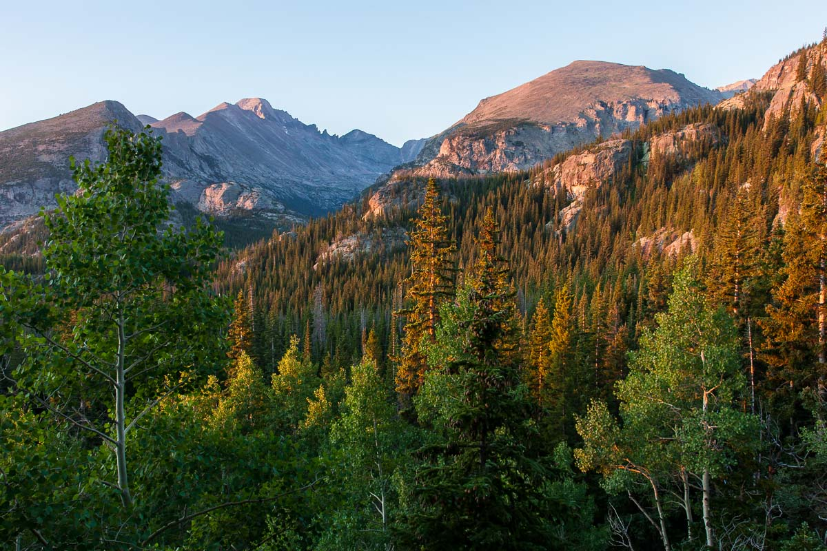 Rocky Mtn Trees, CO