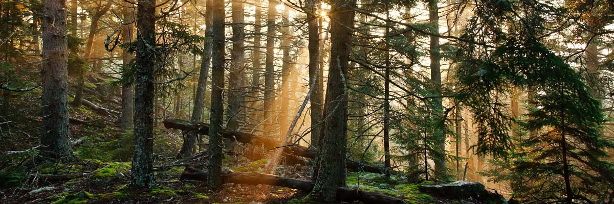 Silent Forest, Maine