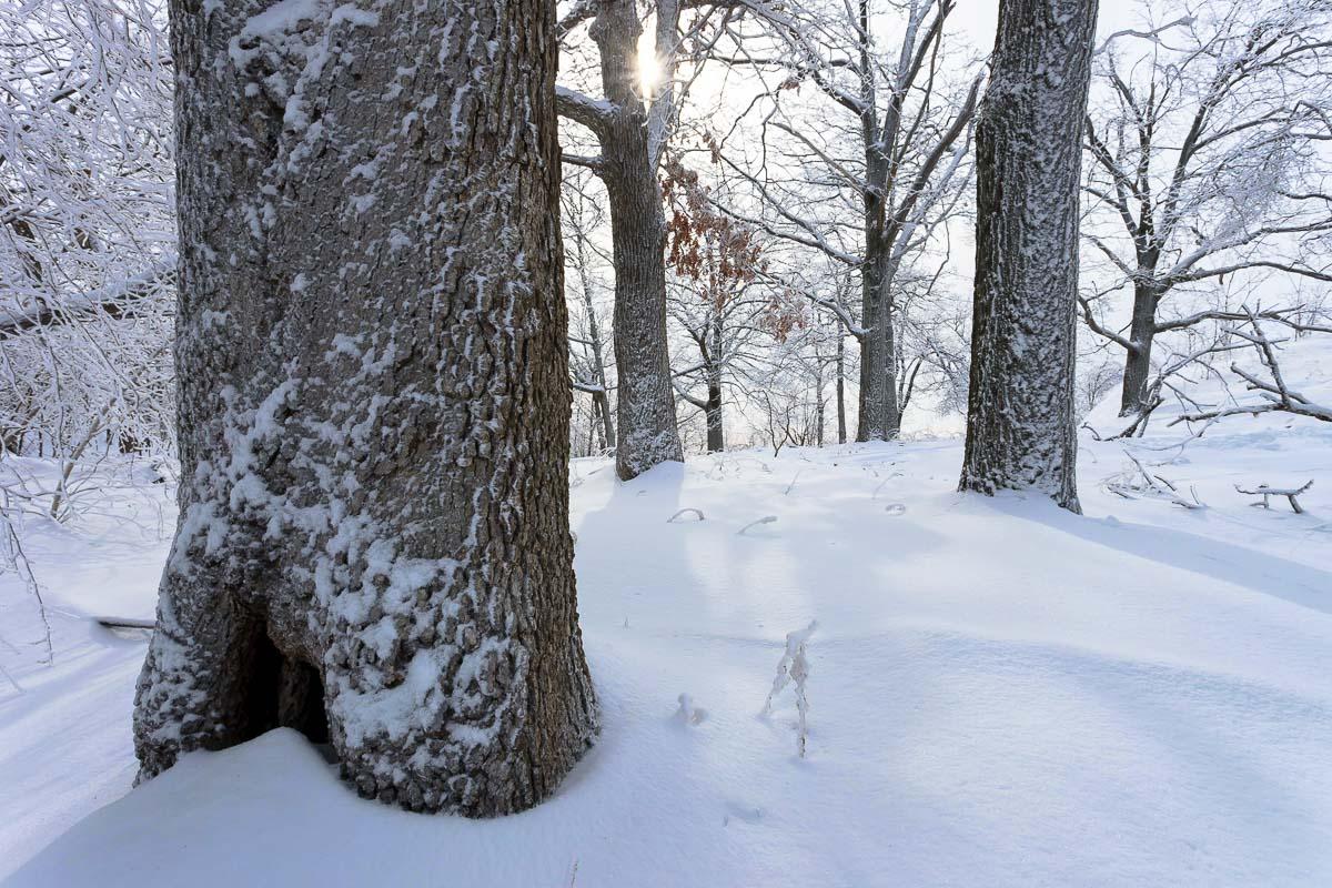 Snow Light, Mt Beacon