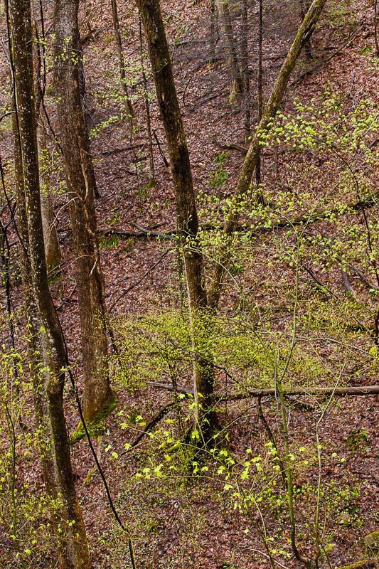 Spring Blossom II, TN