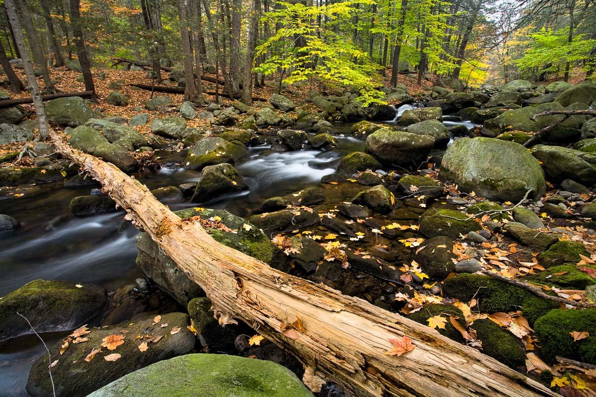 Stony Brook, Harriman