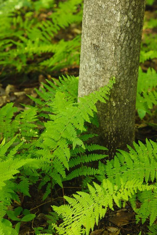 Trees and Ferns II