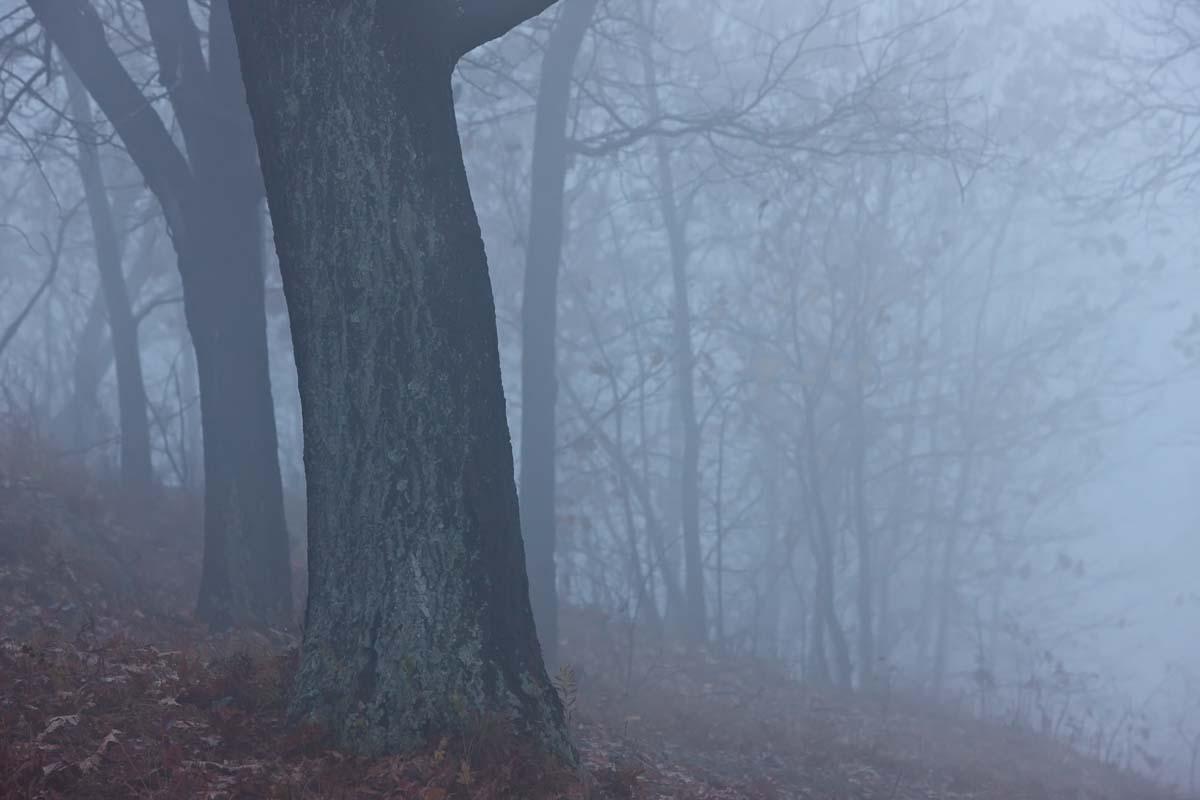 Winter Silence , Hudson Valley