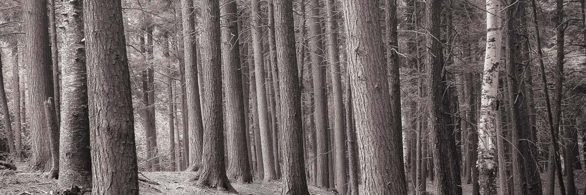 Zen Forest, Adirondacks