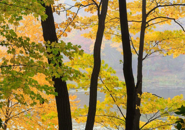 Autumn's Play, Harriman
