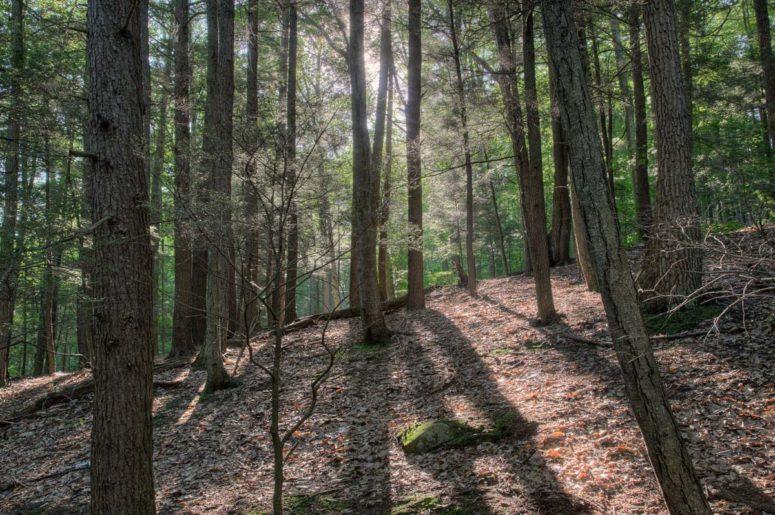 Black Creek Preserve