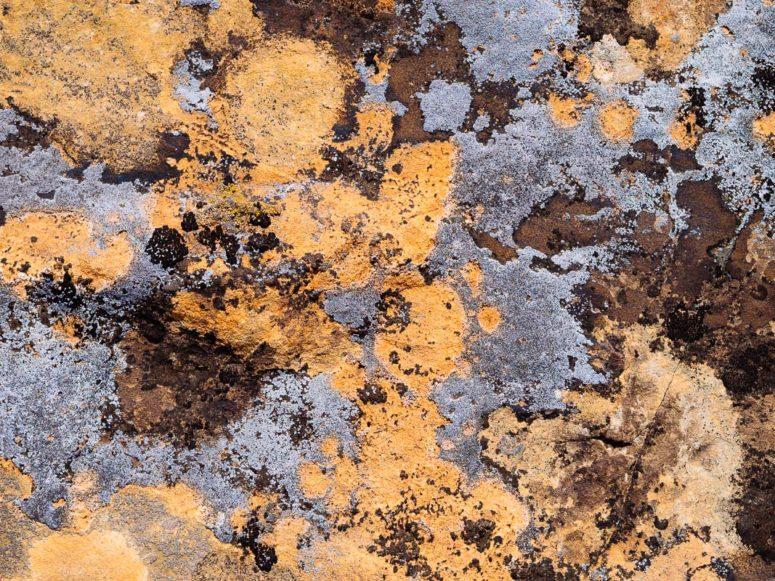 Desert Paint
