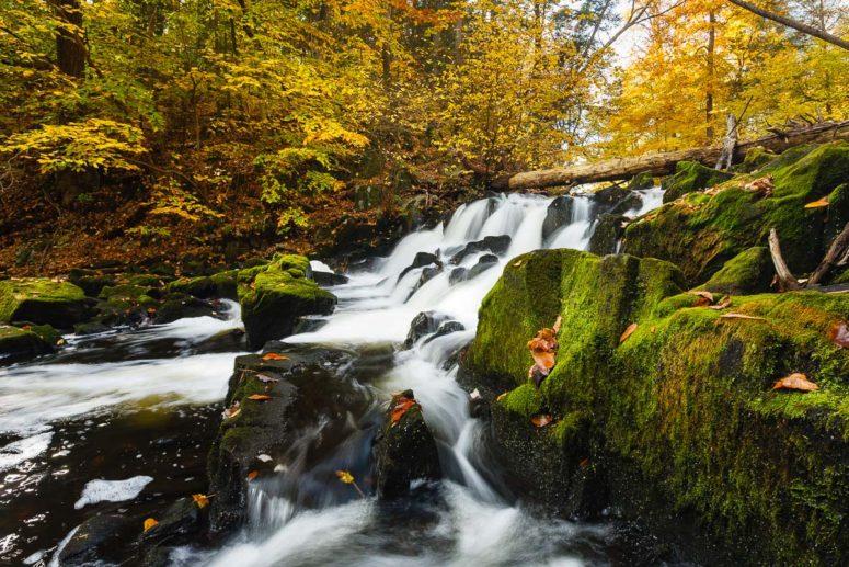 Fall Creek Colors, NY