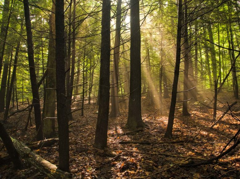 Forest Light, Mohonk Preserve