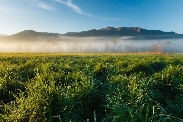 Grass and Fog, Smokies