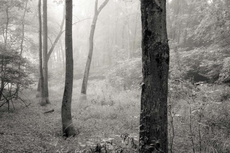 Hidden Trees, Hudson Valley