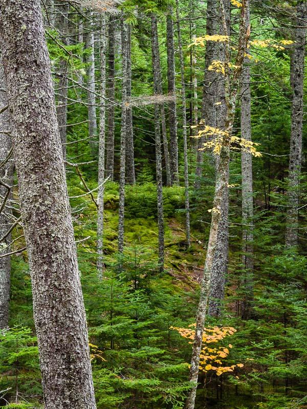 Hunter Trees, ME