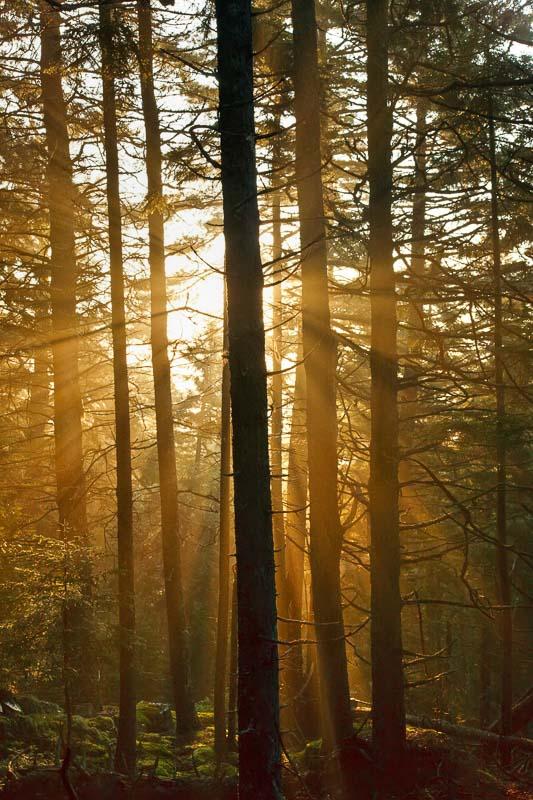 Lightburst, Acadia