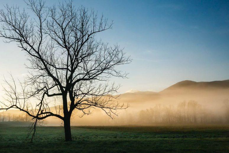Lone Tree at Cades, TN
