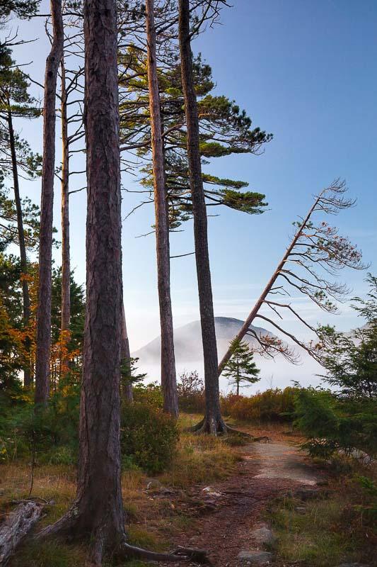 Mystery Trail