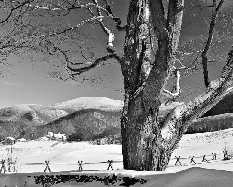 Rugged Oak, Vermont