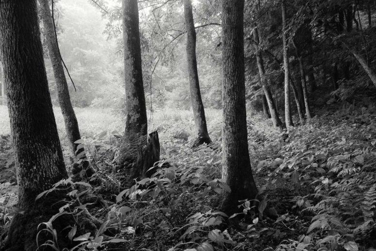 Shadow Trees, Hudson Valley, NY