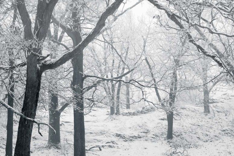 Snow, Fog, and Trees, NY