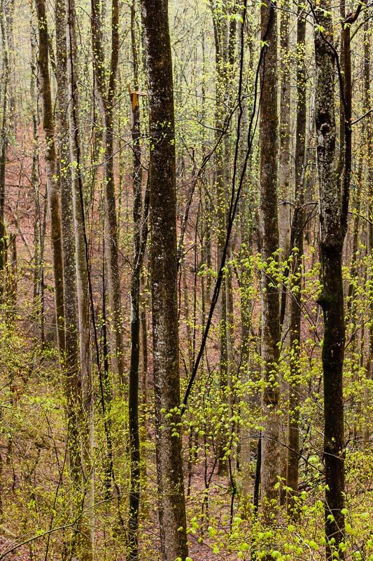 Spring Blossom III, TN