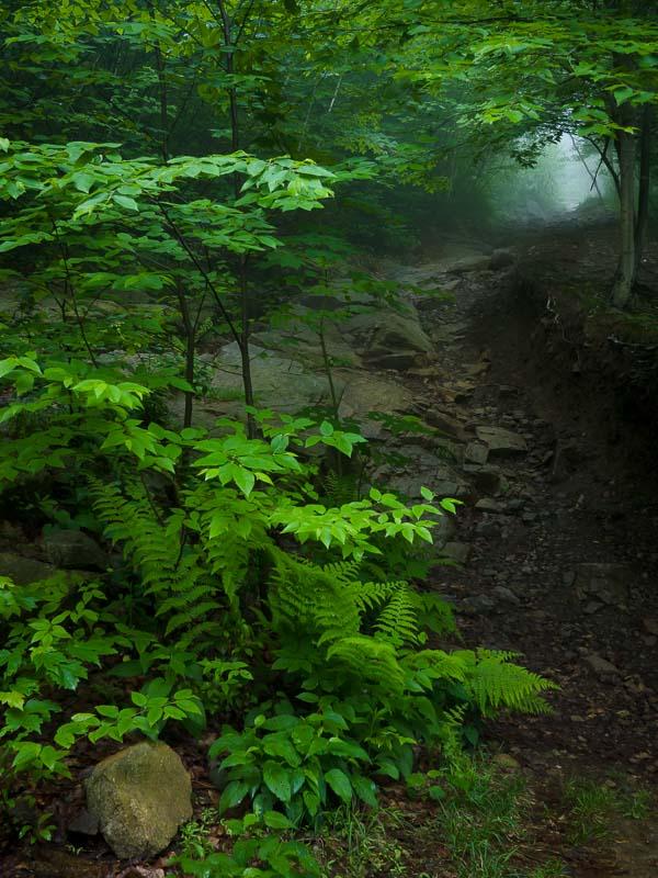 Trail Light, NY
